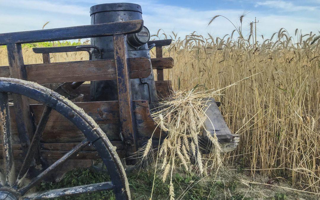 Festa del grano